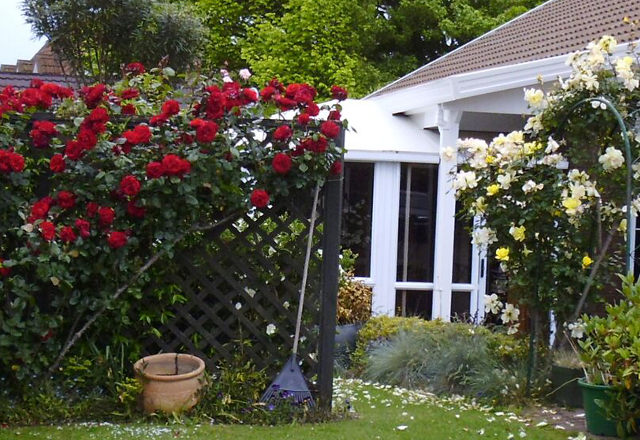 Rose spraying services in the Waikato